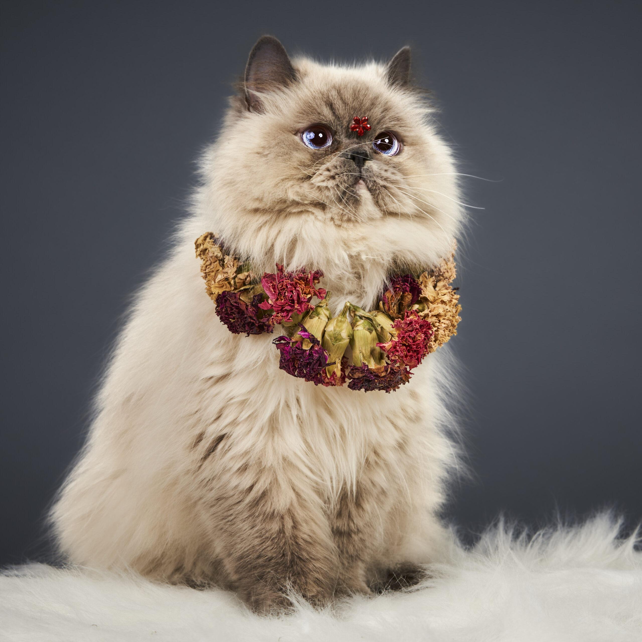 Gato Fiona